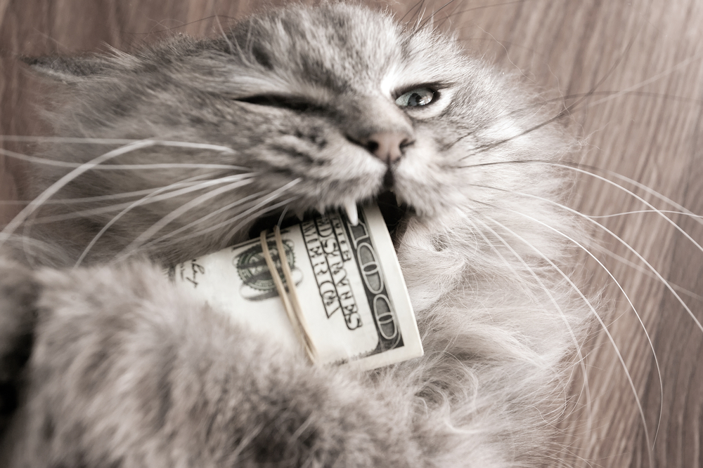 cats love money