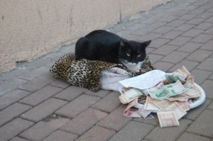 beggingcat